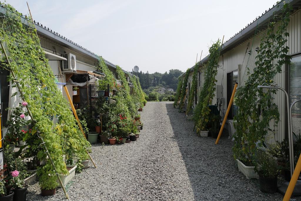 仮設住宅×緑のカーテンプロジェクト