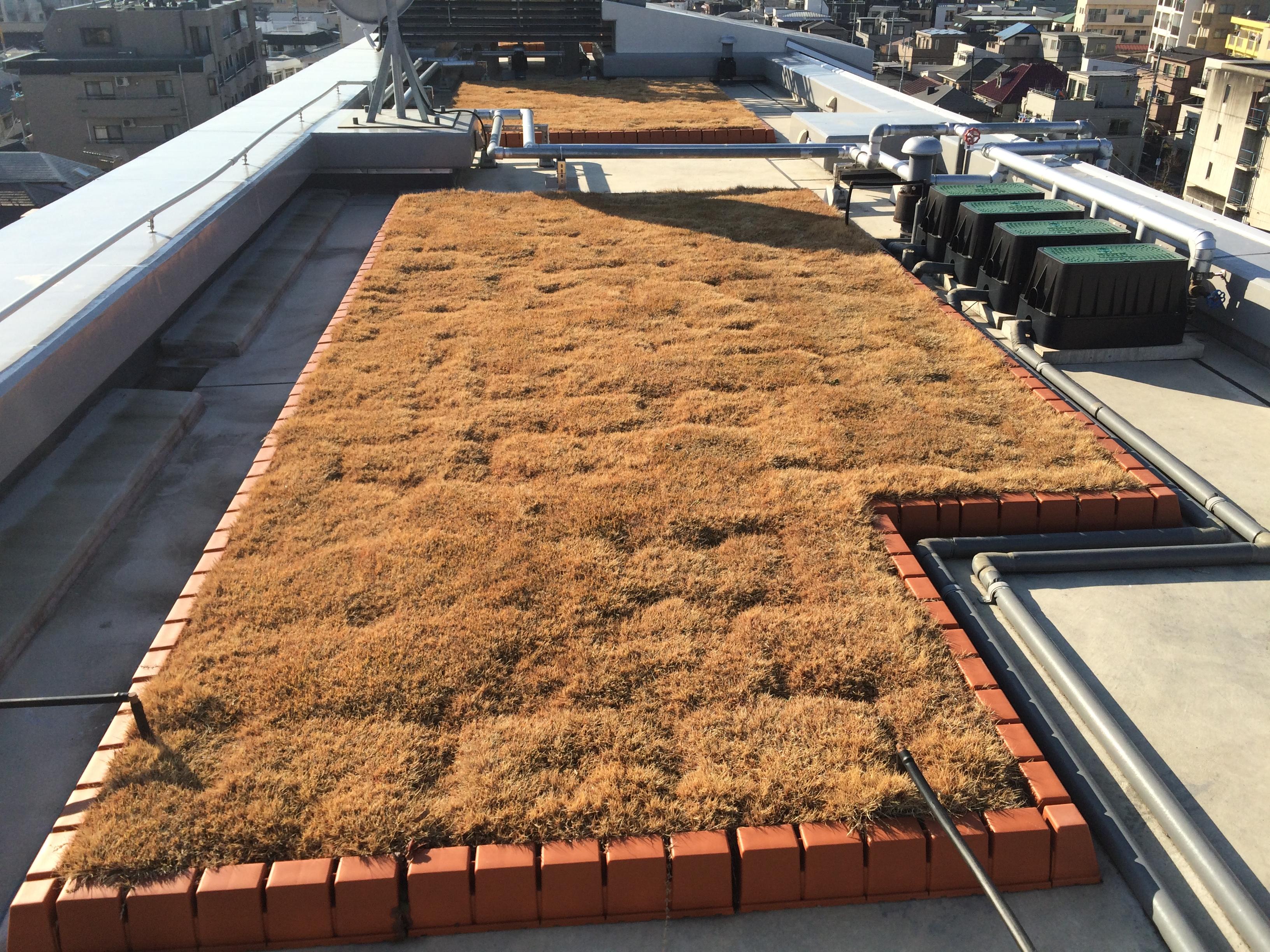 蓮根屋上緑化冬