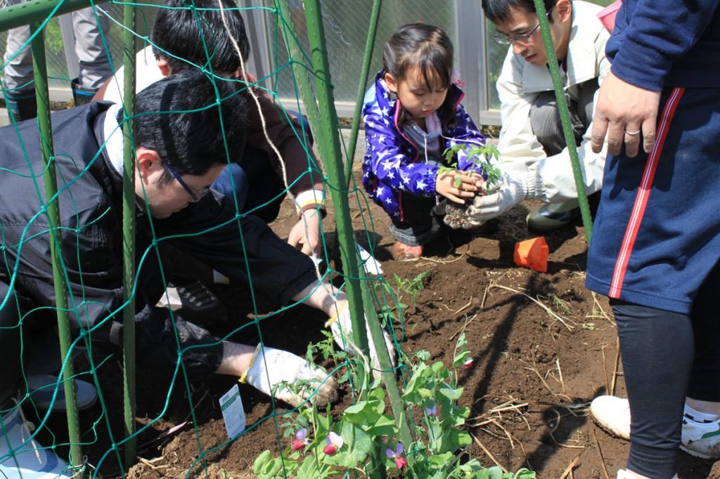 農援隊の皆さんと、お子さんも一緒に菜園で苗植え